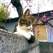 墙头等红杏